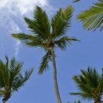 Solocruceros_blgo_caribe